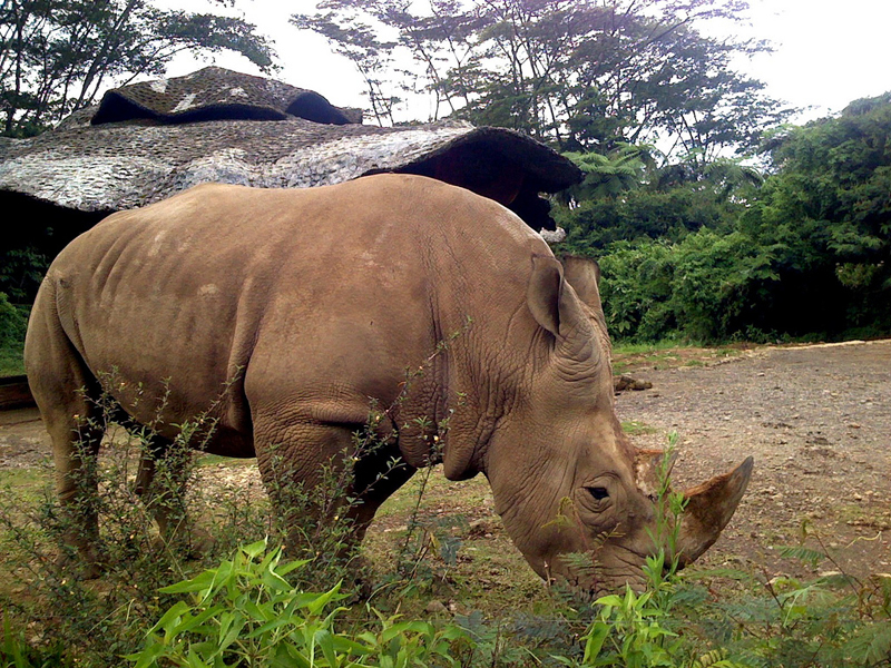 Rhino-Ujung-Kulon-National-Park