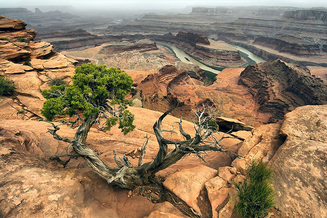 canyonland6